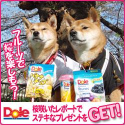 250x250_sakura_dole2.jpg